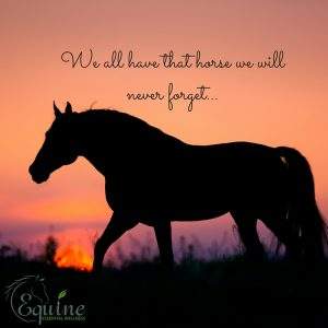 We all have that horse we will never forget...