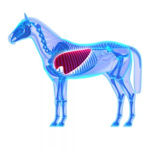 Coughing in Horses