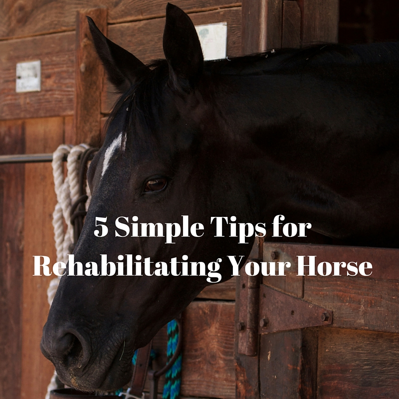 Rehabilitating your horse