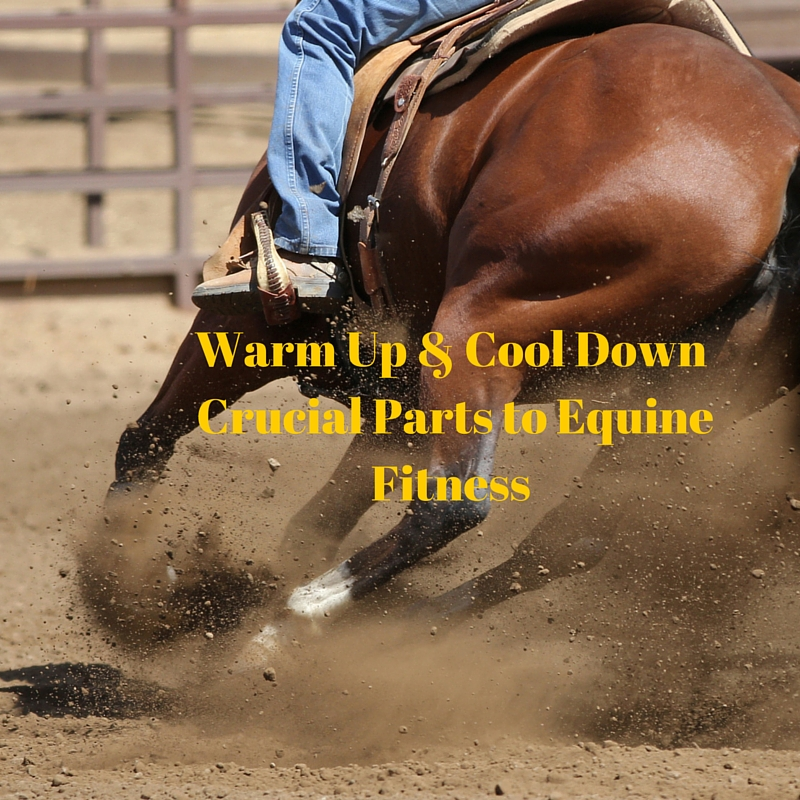 Crucial to Equine Fitness