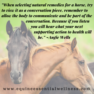 equine nutrition -