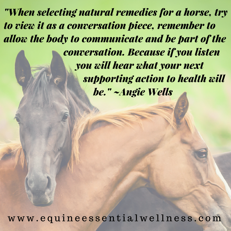 natural equine nutrition and horse supplement