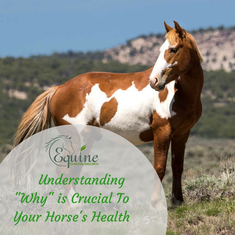 Understanding Why in Horse Health