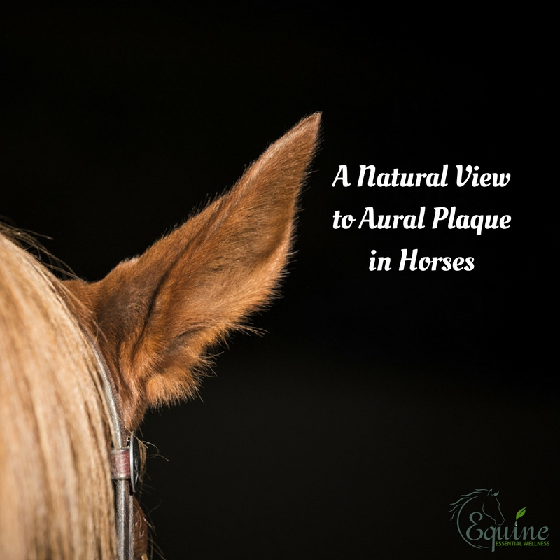 Equine Naturopathy View of Aural Plque