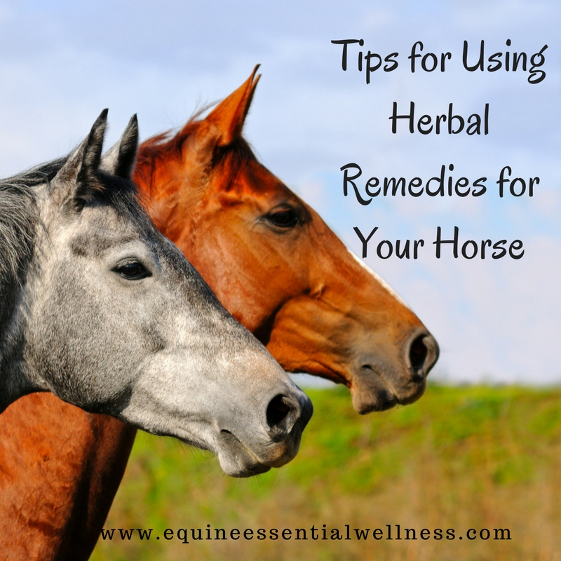 herbal remedies for horses