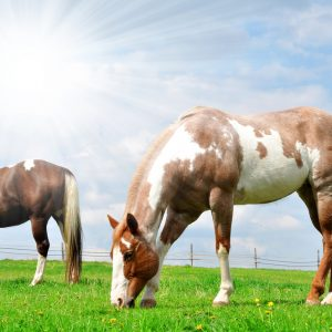 Equine Nutrition and Supplements