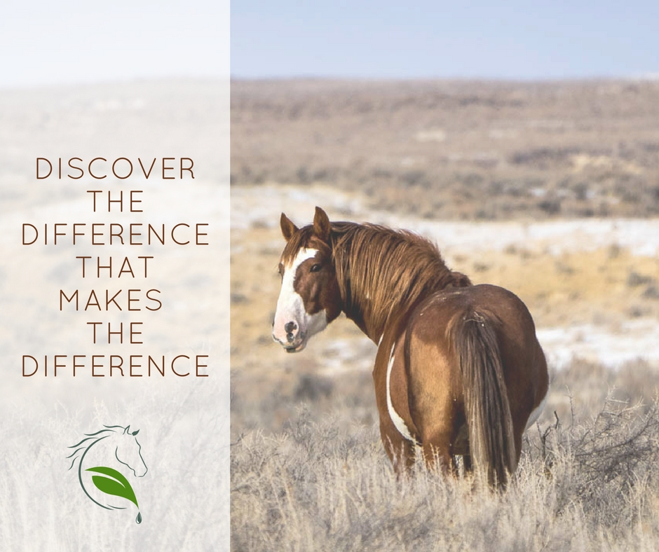 equine nutrition the difference