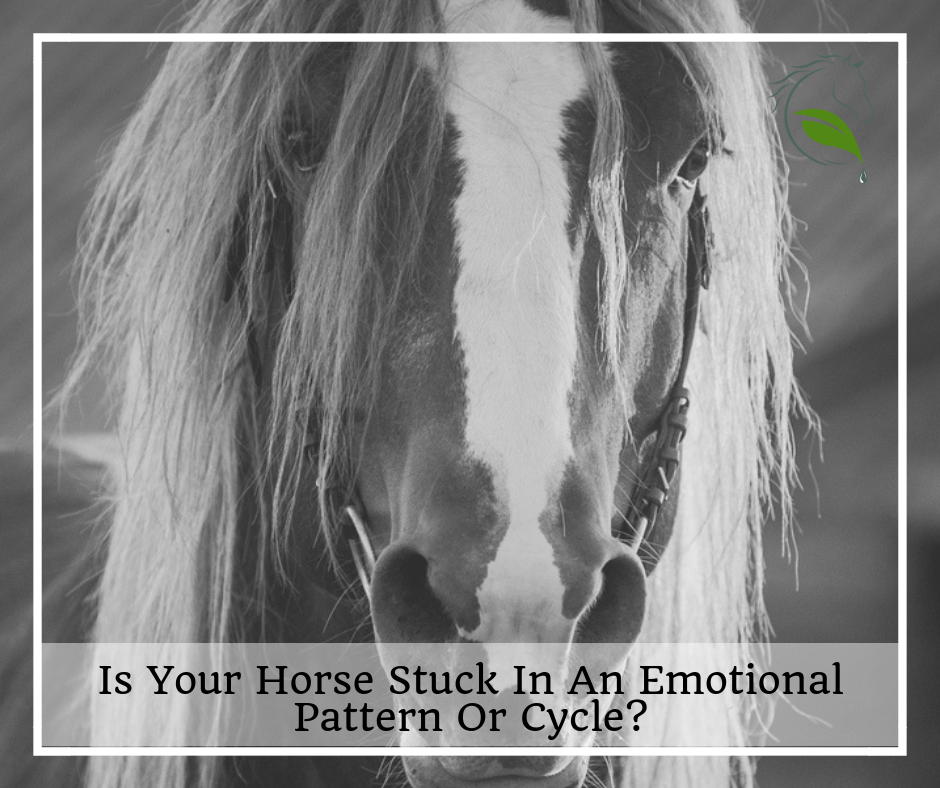 Equine Emotions
