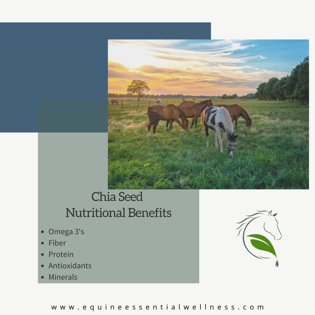 Chia Seeds as a horse supplement