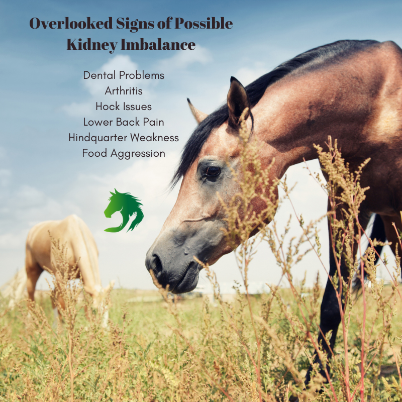Signs of Kidney Problems in Horses